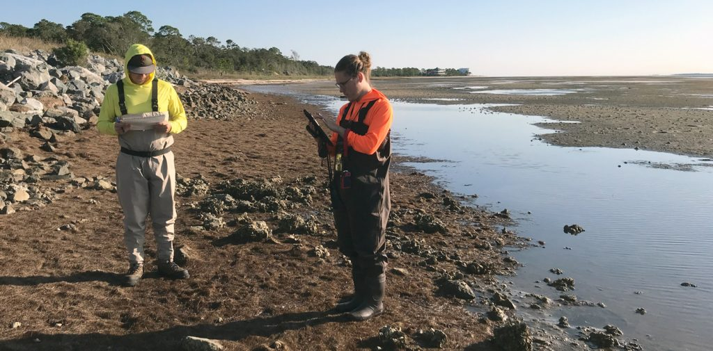 Collecting oyster size data